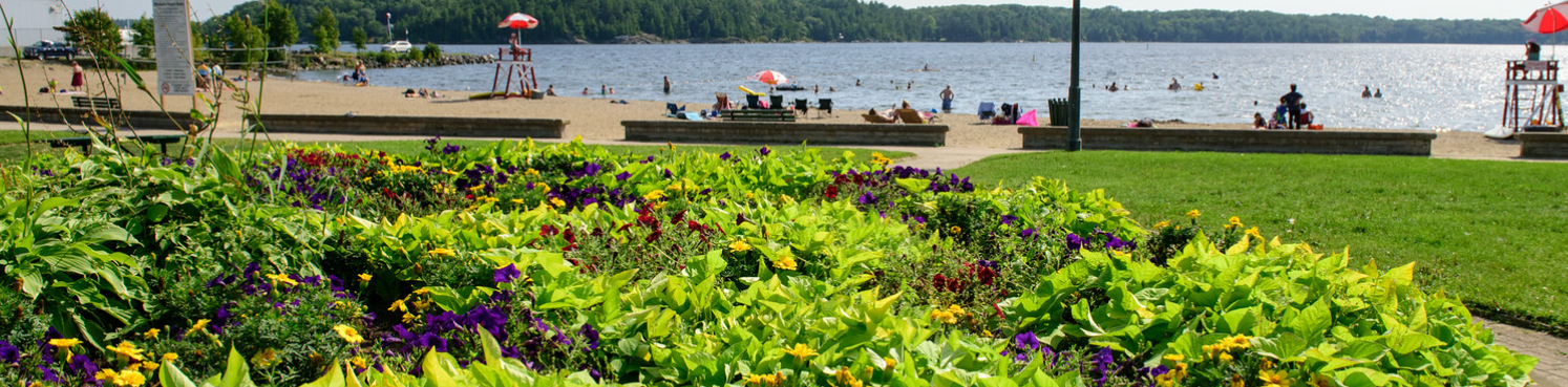 A flower garden in the foreground with a beach in the background.
