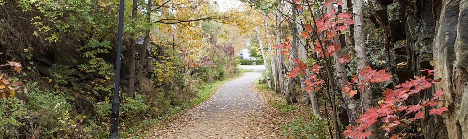 Fitness Trail with fall leaves